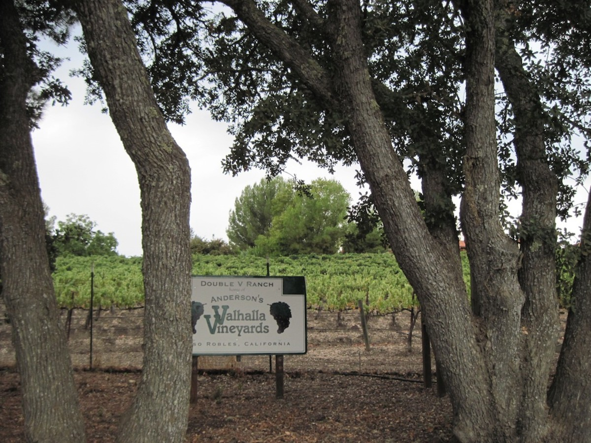 These oaks stand outside the fence at Valhalla Vineyards in Paso Robles, California