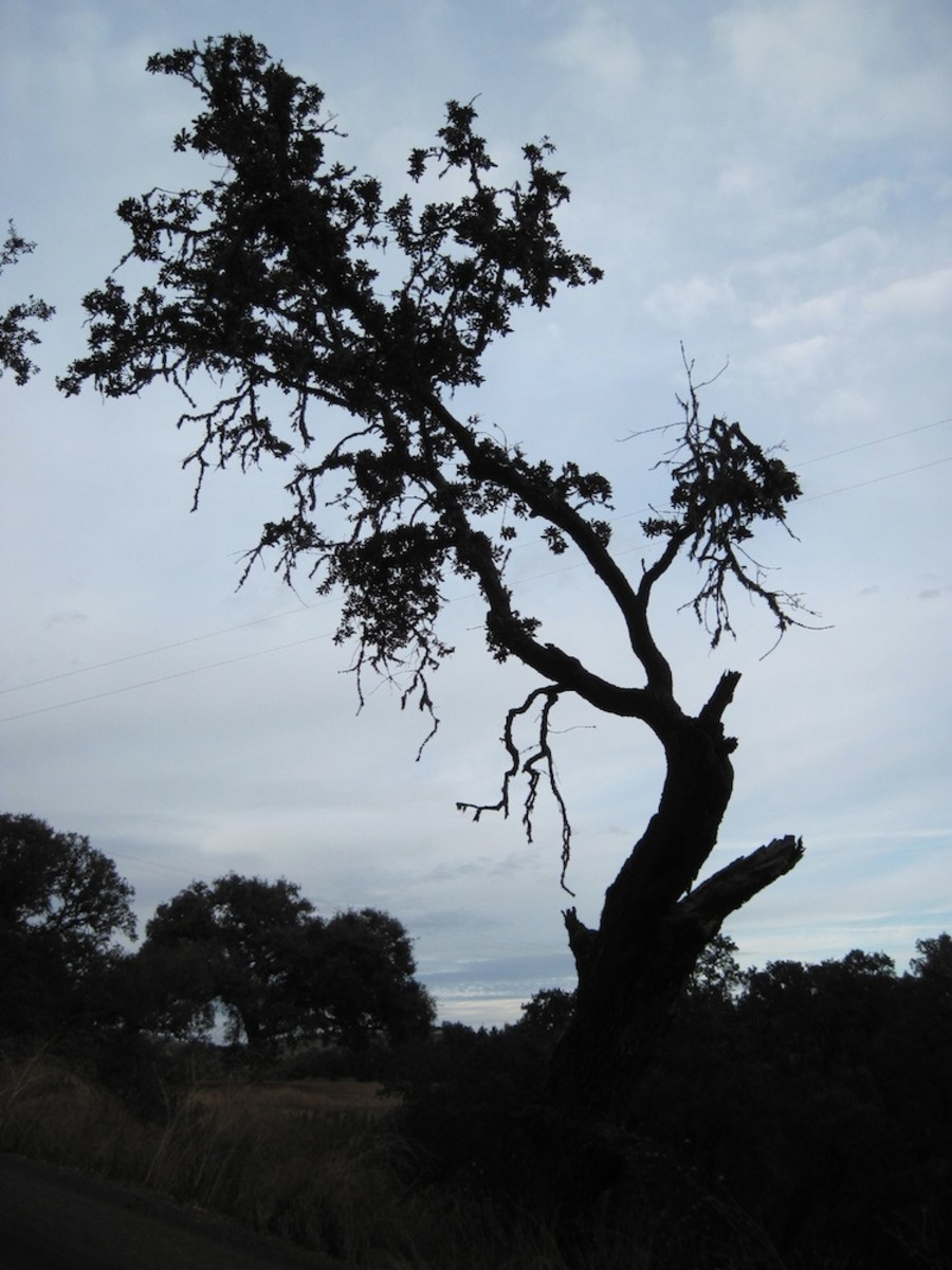 I believe brokenness gives trees more character. Arbor Road seems to be hard on trees, for this one lives there, too.