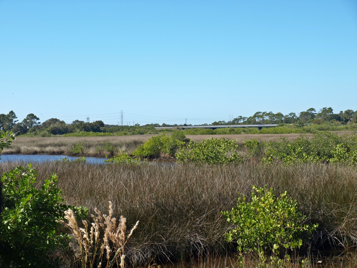 Upstream from the mouth, the Anclote River becomes shallow and is surrounded by salt marshes which are home to a variety of birds, fish, and shellfish.