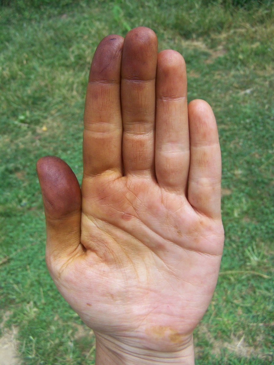 Wear Gloves! Black walnut will stain your hands.