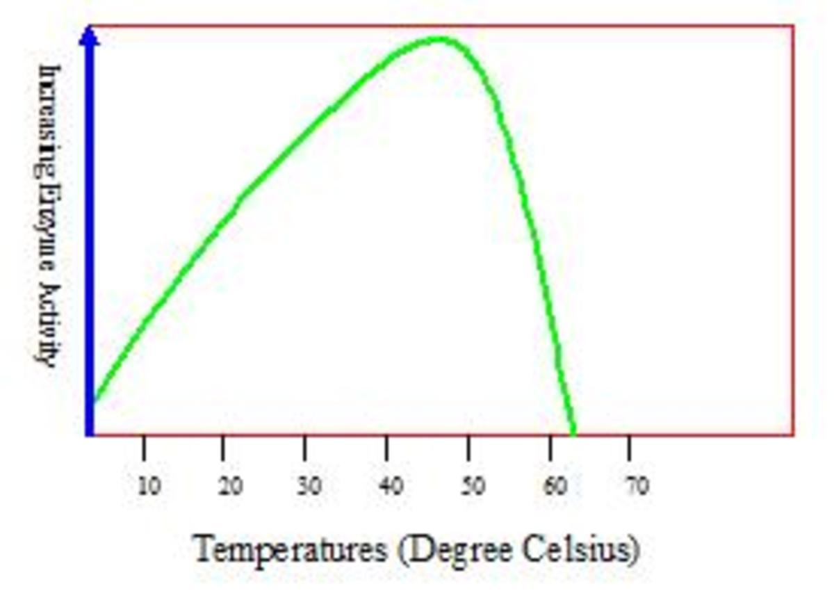 Digestive Enzymes Optimum Temperature of 37°C to 42°C