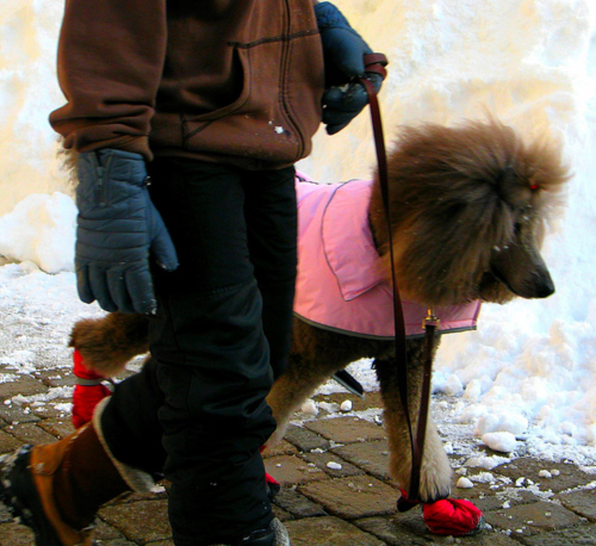 Does my dog need winter clothes?