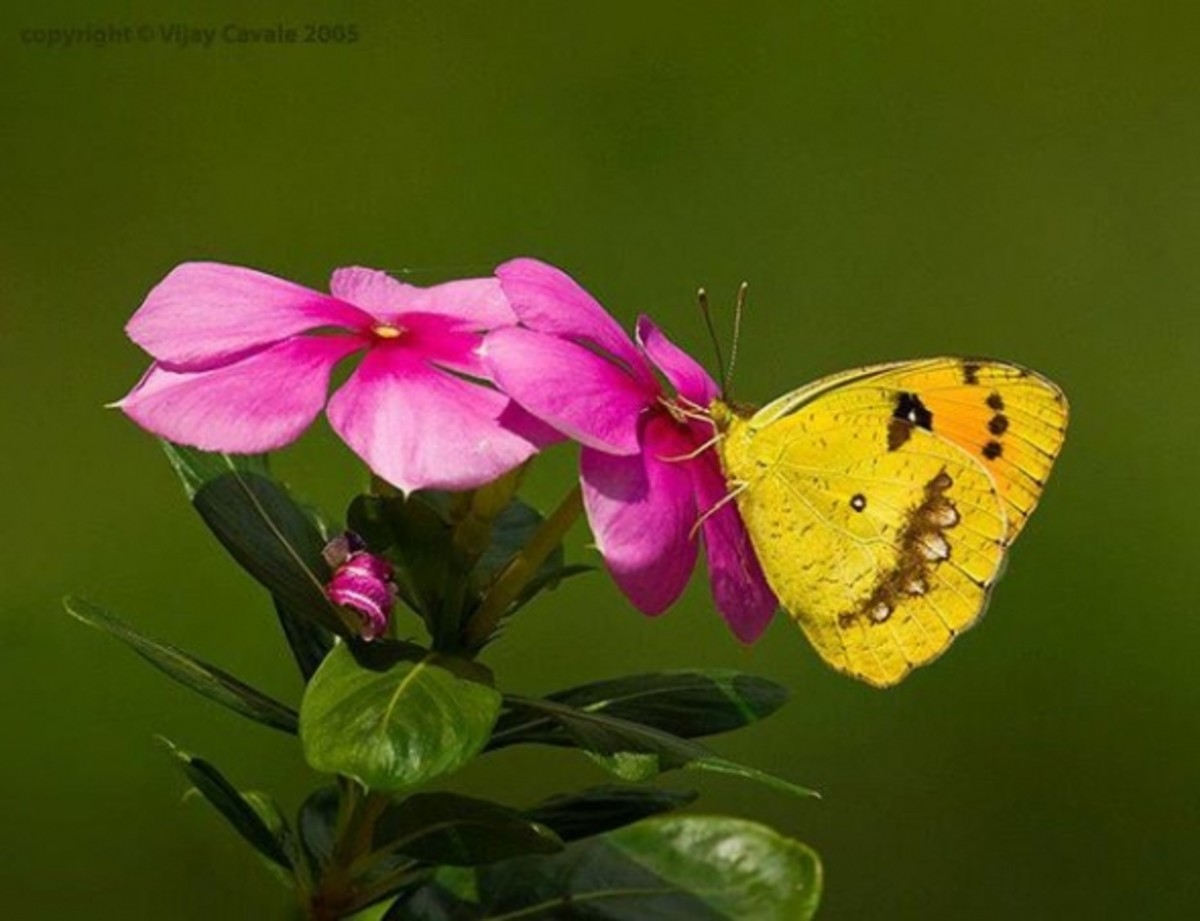 beautiful-butterfy-images