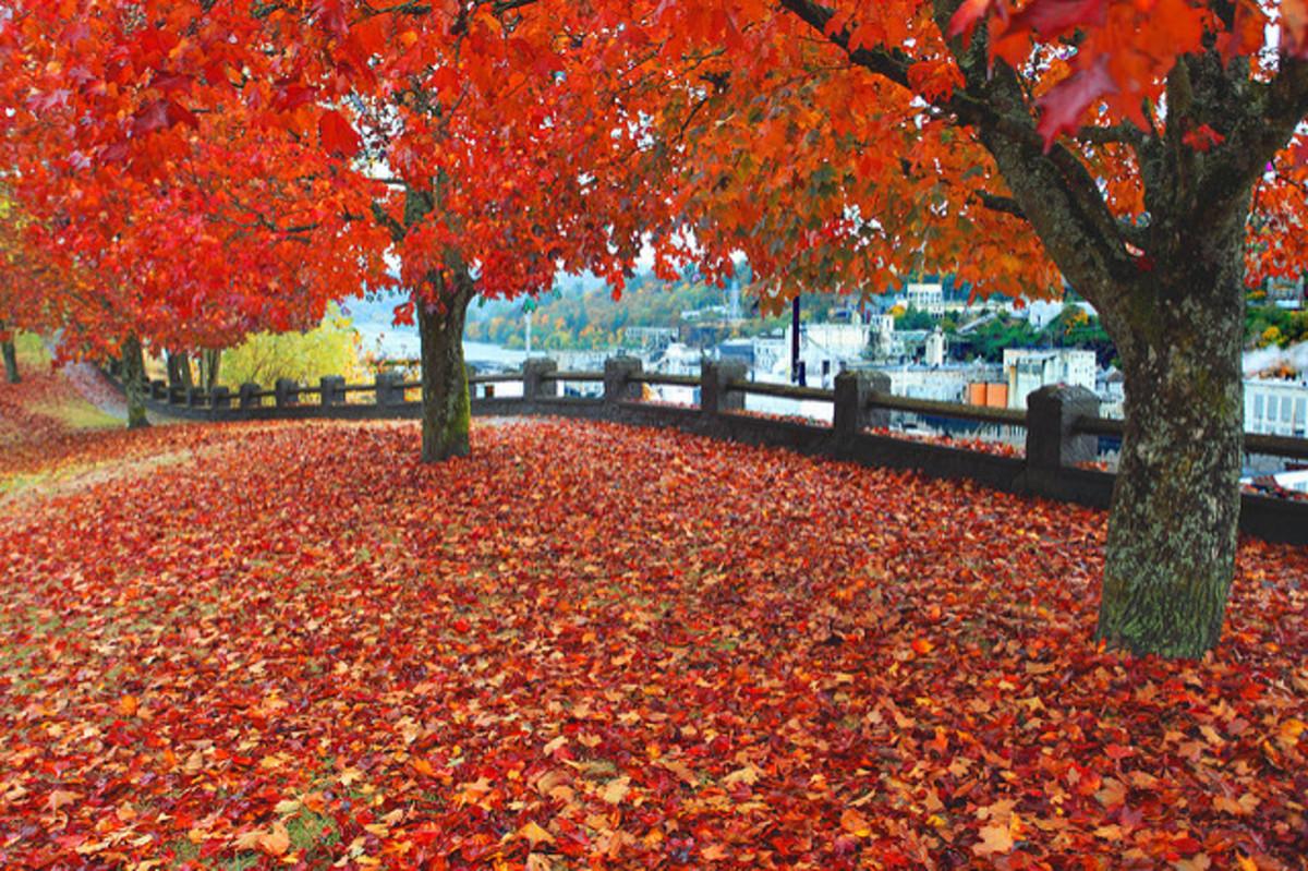 Poems on Fall (Autumn)