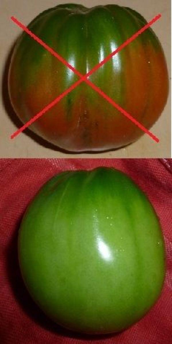 Bad & Good Tomatoes