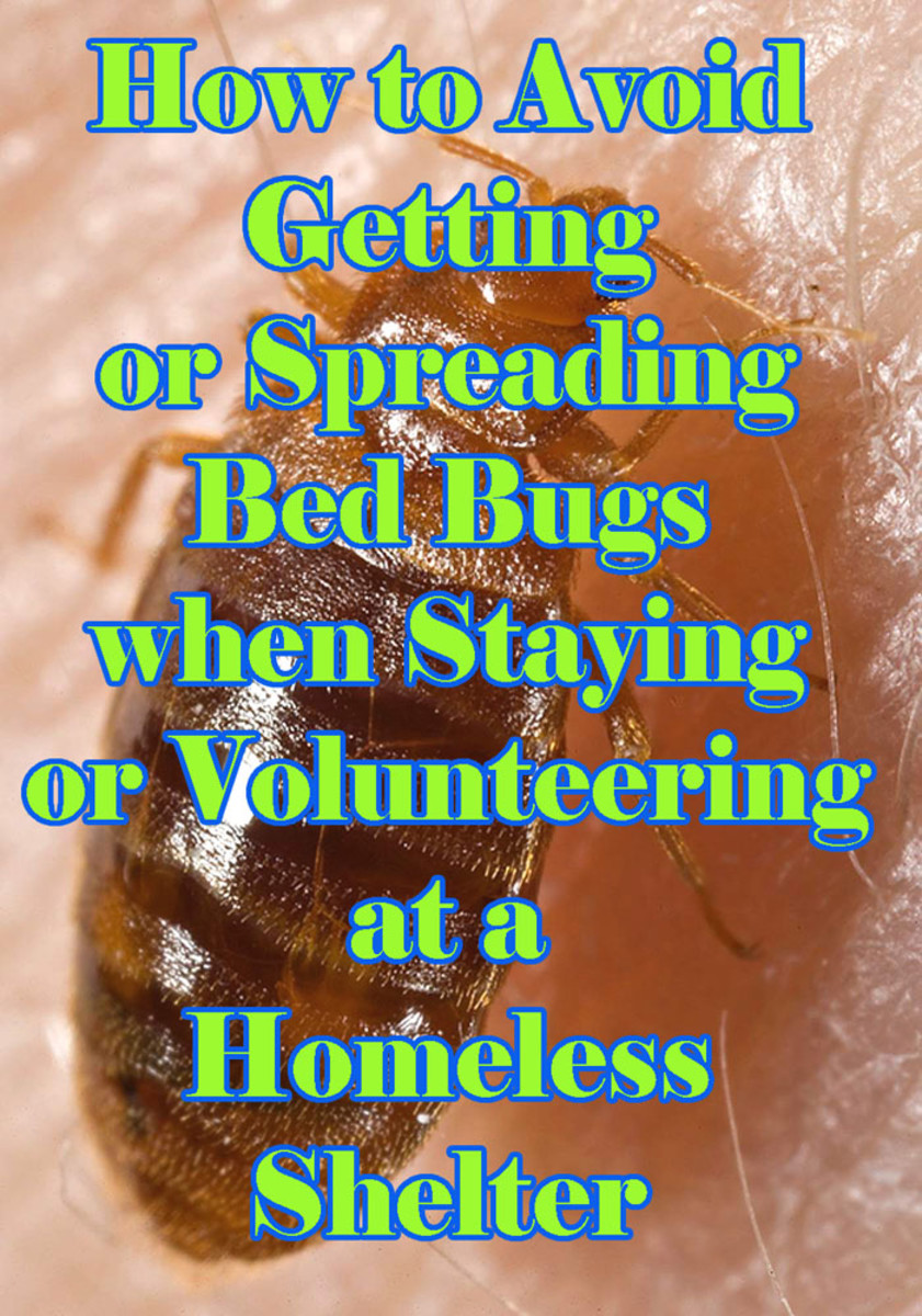 Learn how to reduce your risk of spreading or getting bed bugs from homeless shelters.