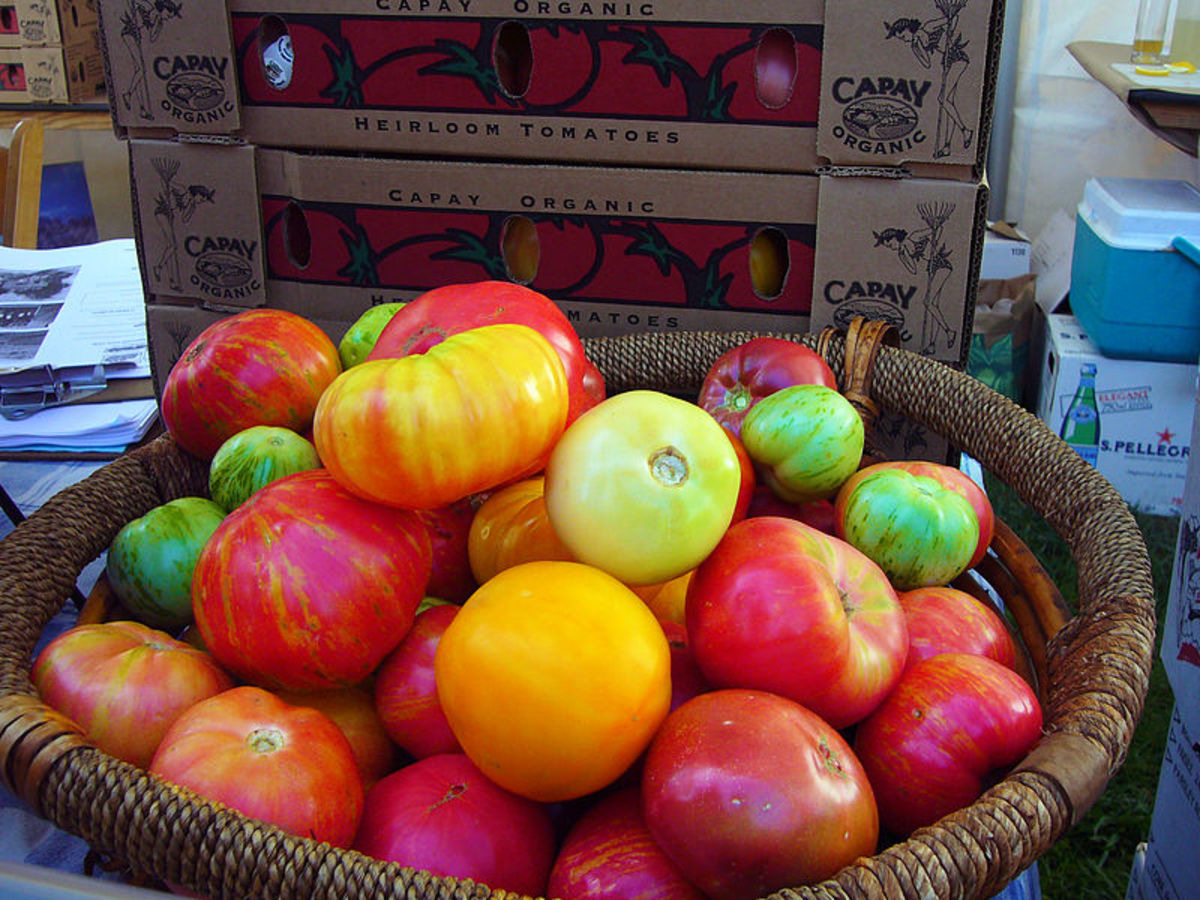 In This Photo Is A Collection Of Delicious Heirloom Tomatoes.