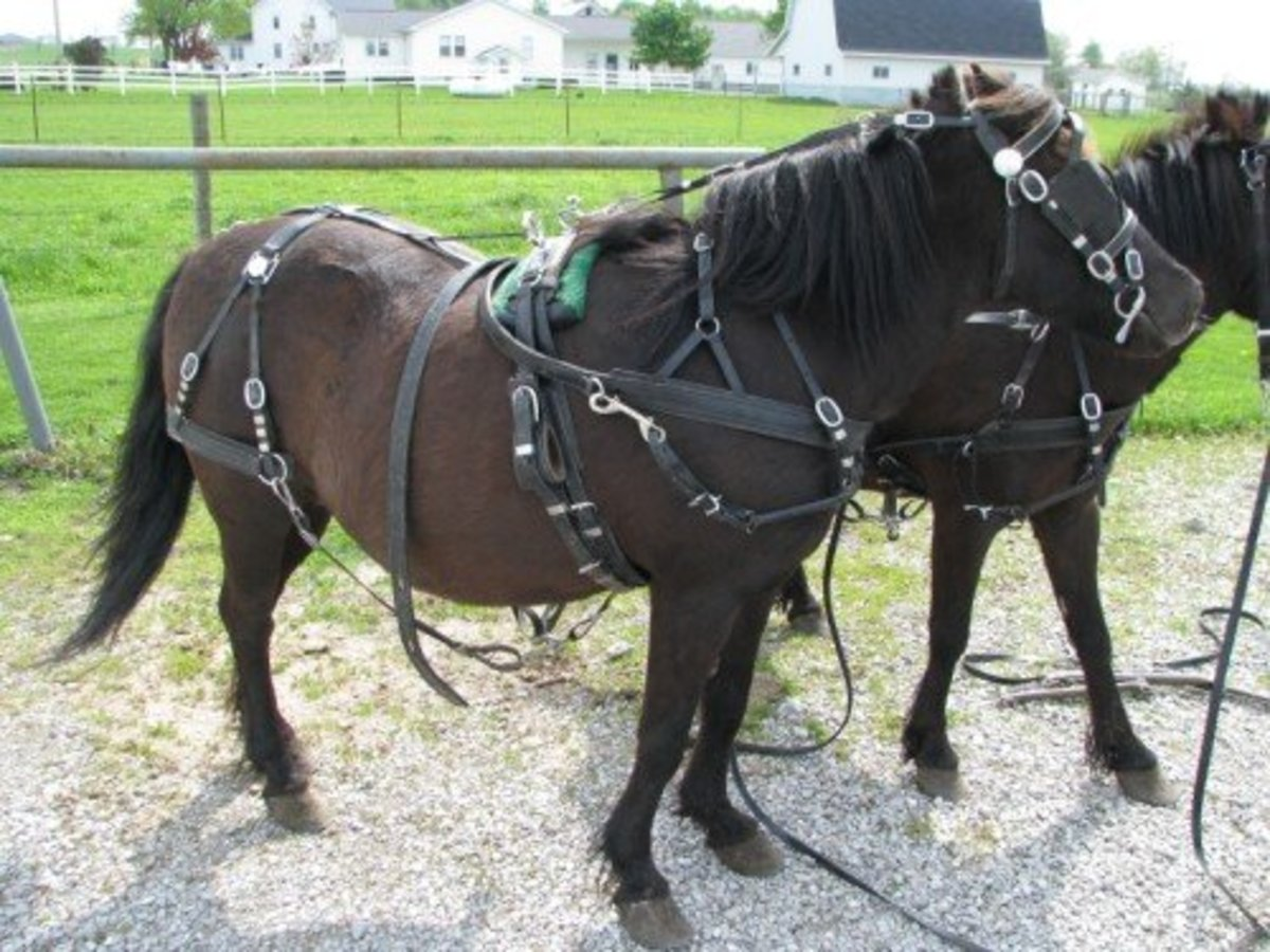 Pony Harness
