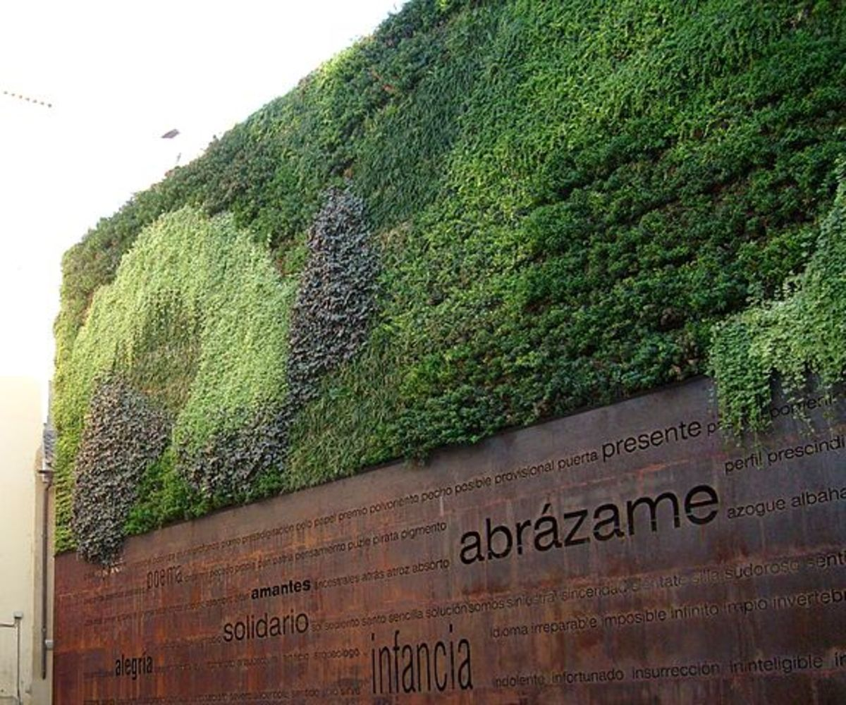 a-healthy-fad-vertical-gardens-with-documentary