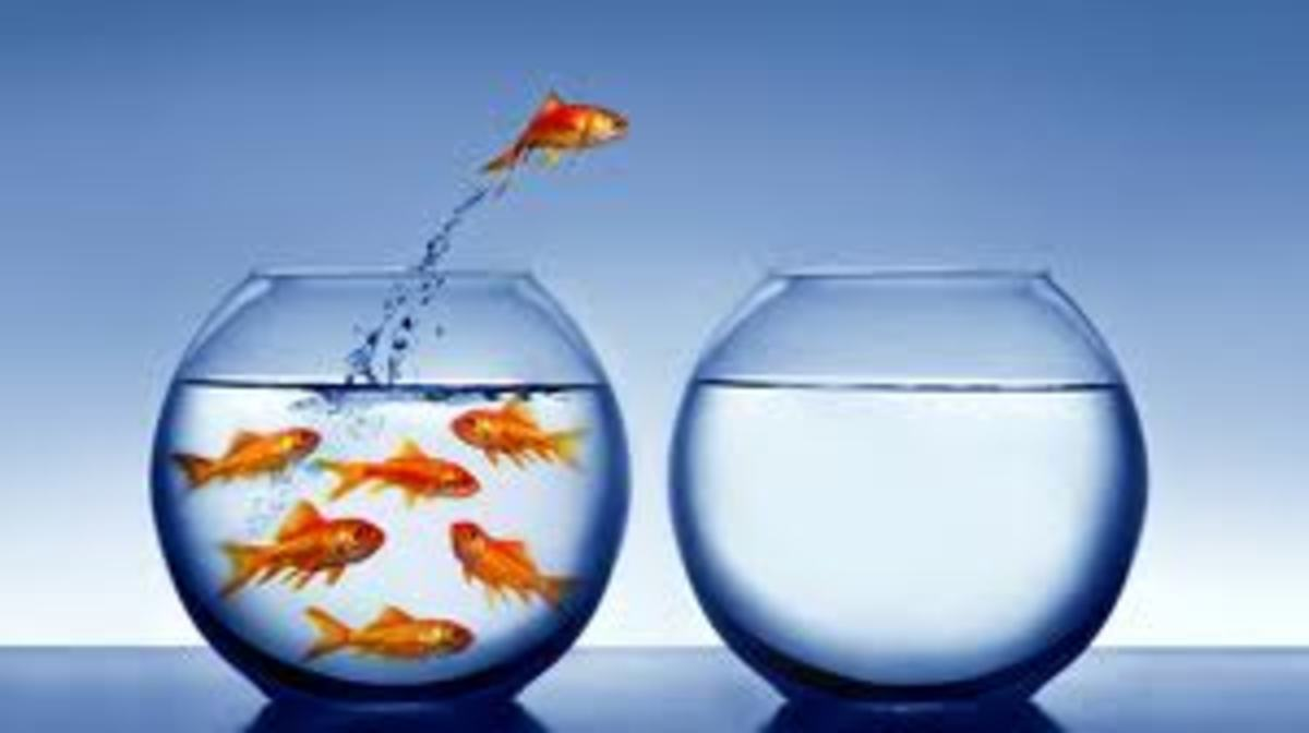 Even fish can escape those that make us feel guilty