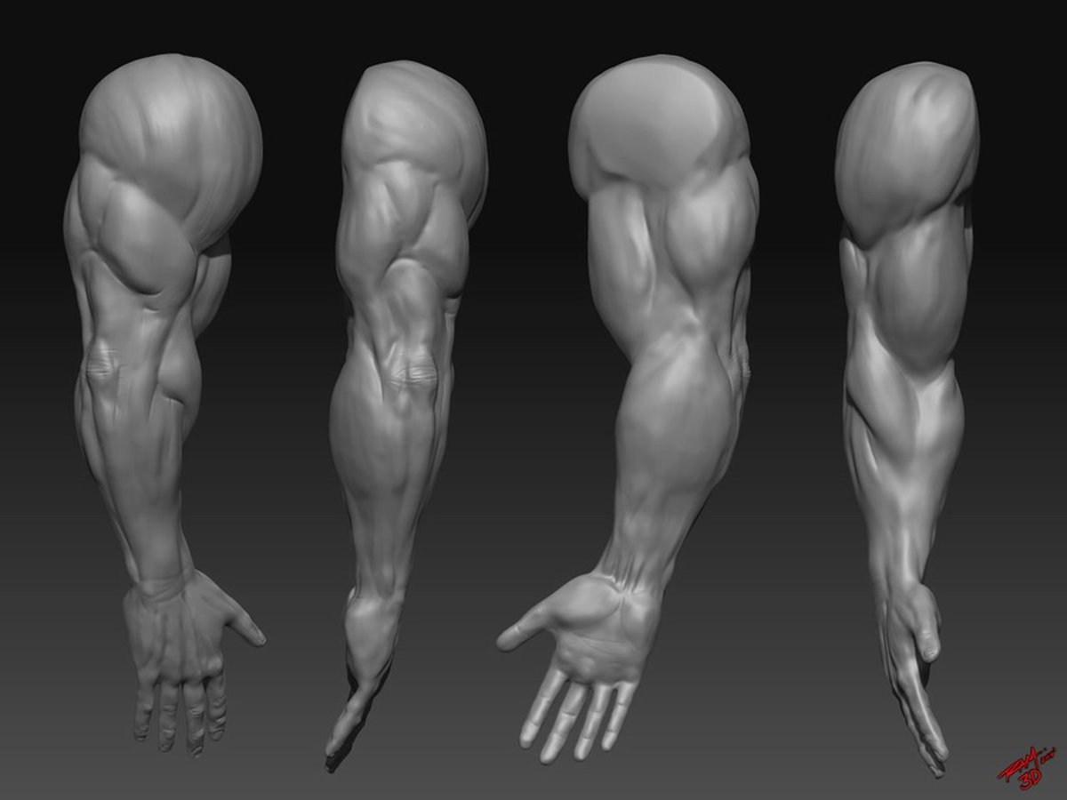 Tips On Growing Bigger Stronger More Muscular Arms Hubpages