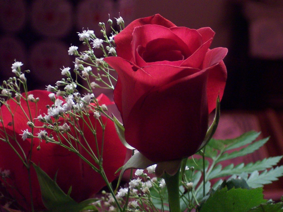 Rose's Love
