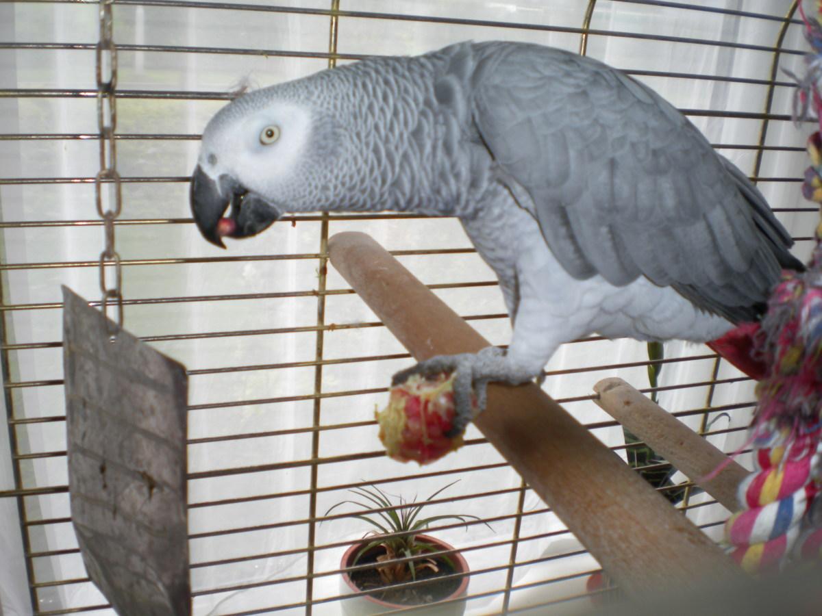 My Parrot (Tats)
