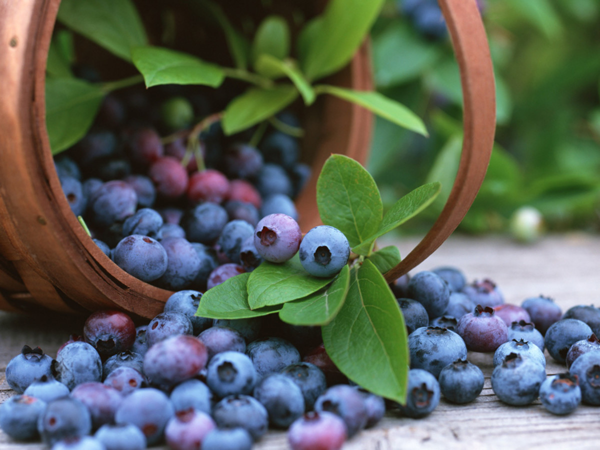 Blueberries can help to clear up UTI's