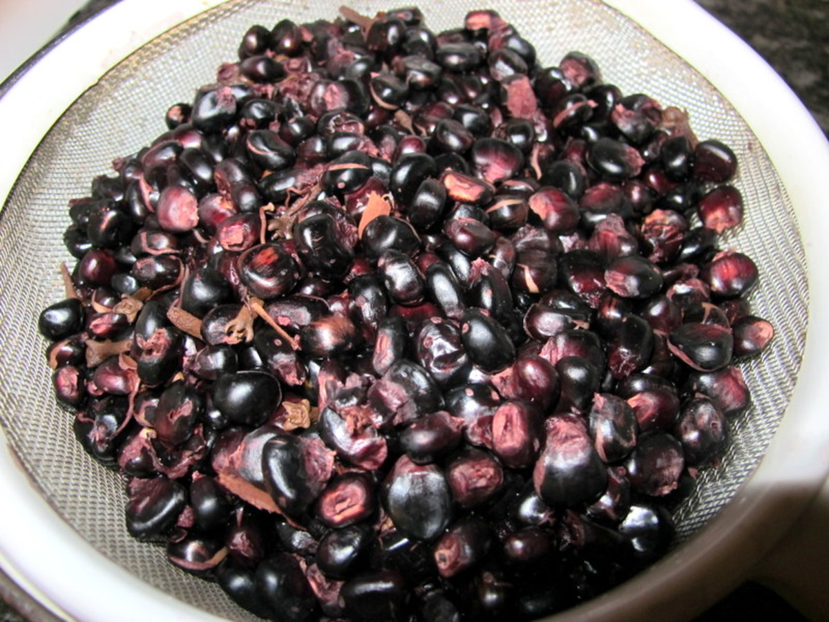 Purple Corn Kernels