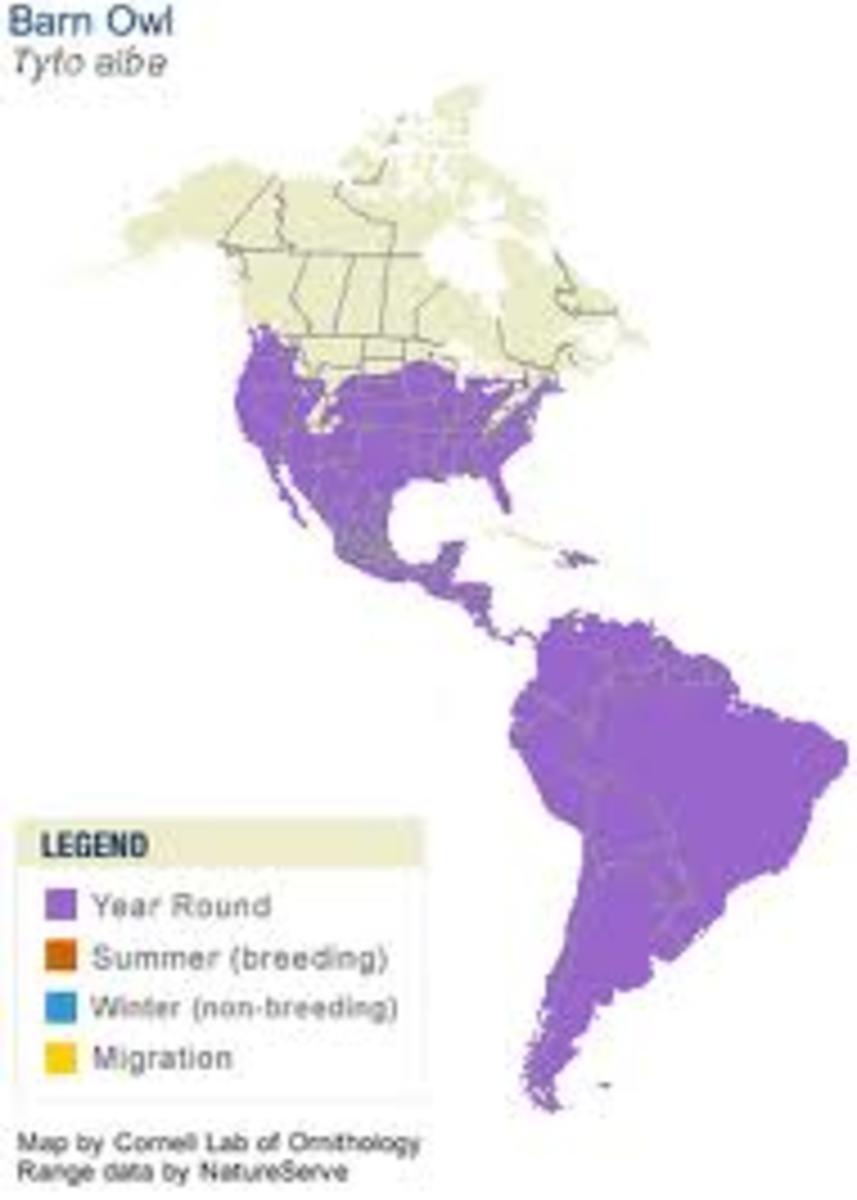 Barn Owl Range Map.