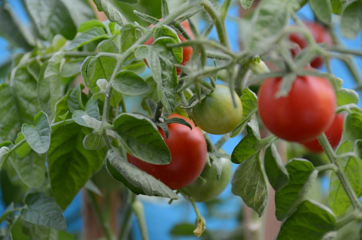 Turmeric - the new eco-pesticide of the future?