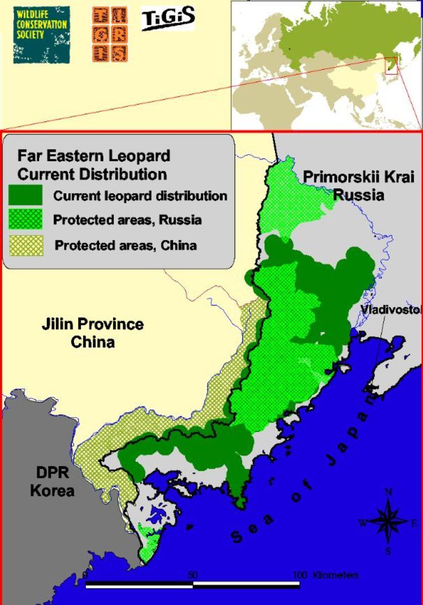 Amur Leopard distribution
