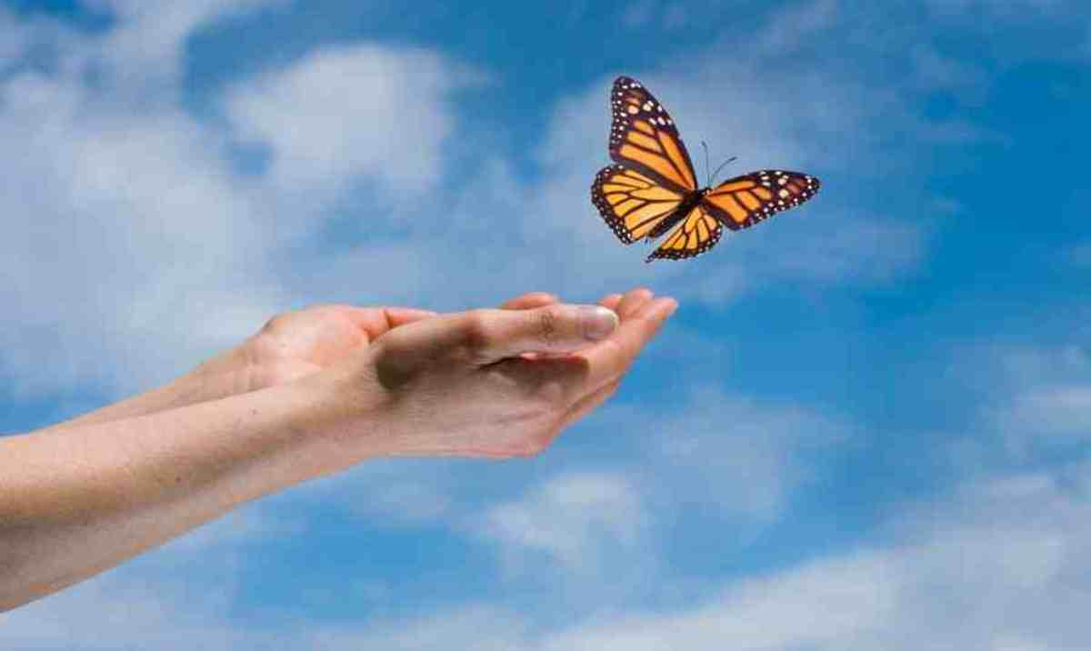 butterflies change shape from caterpillar to beautiful flying creatures.