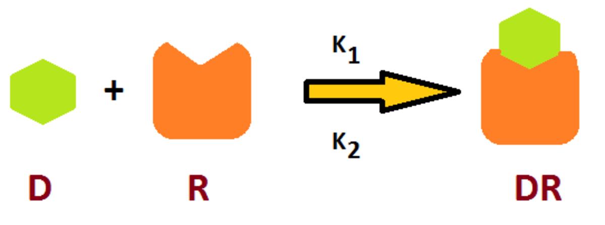 Individual Receptors: Cholinergic receptor, Adrenergic receptor, Histamine receptor & Dopamine receptor - ePharmacology