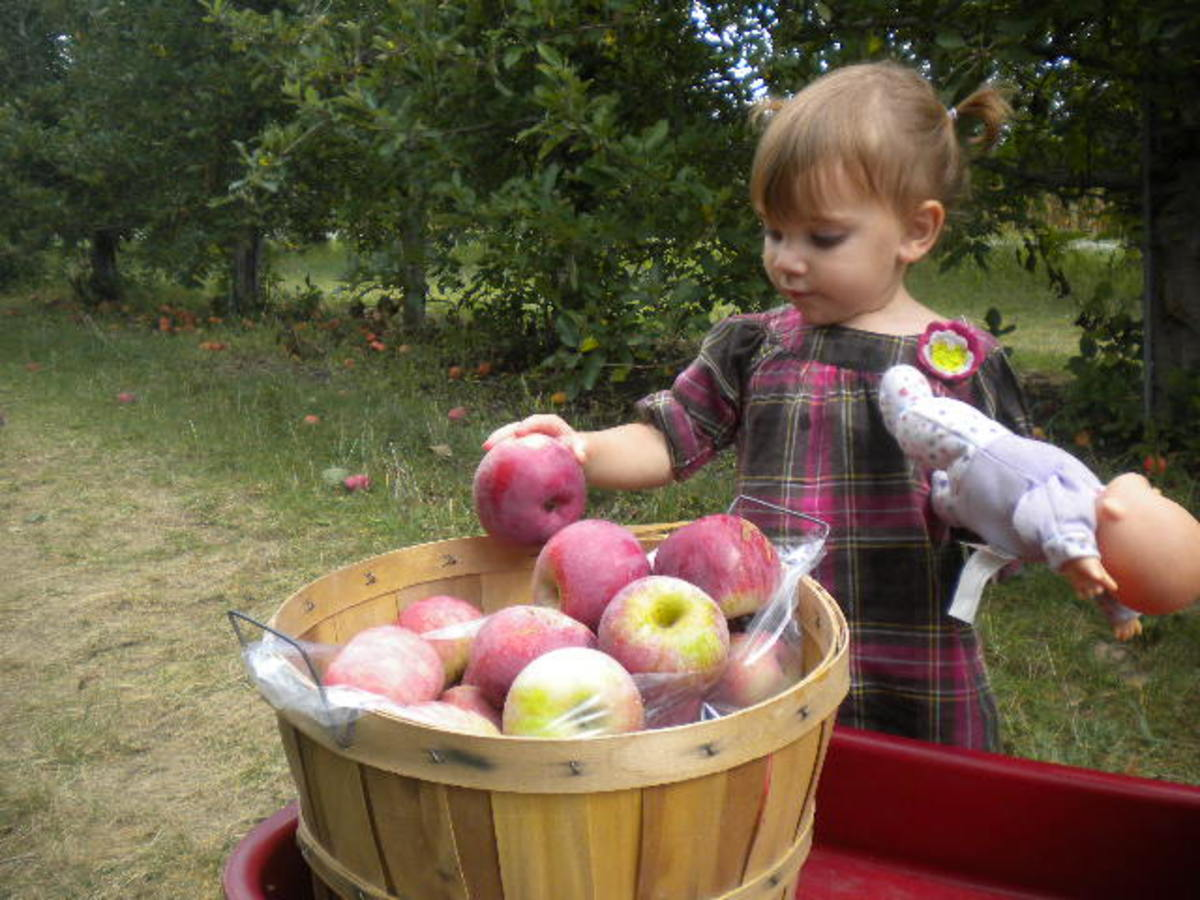 Young children will love helping to load up the bushel baskets full of delicious apples.