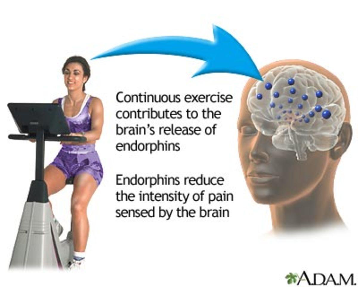 endorphin-a-feel-good-hormone