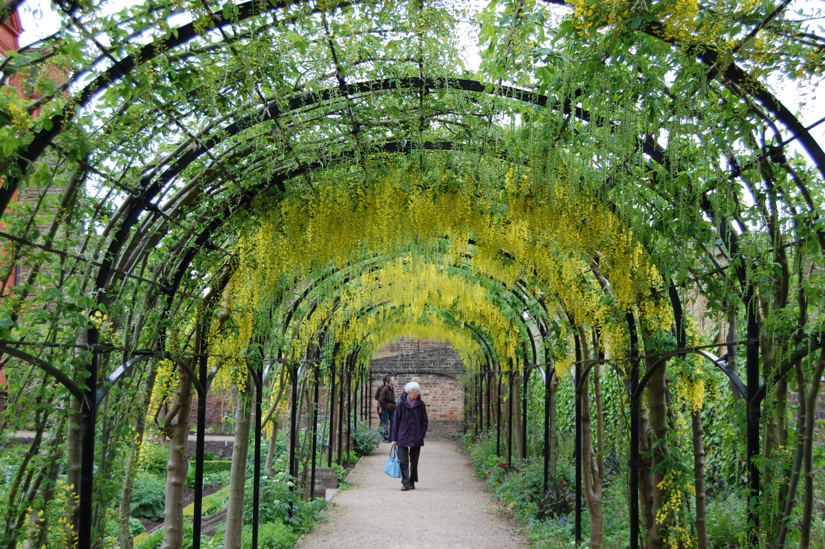 long and inviting wire garden pergola with walkers underneath the garden greenery