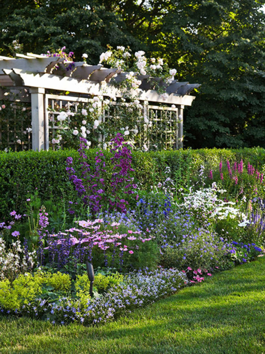 privacy pergola adorned with roses and a garden in the forerground