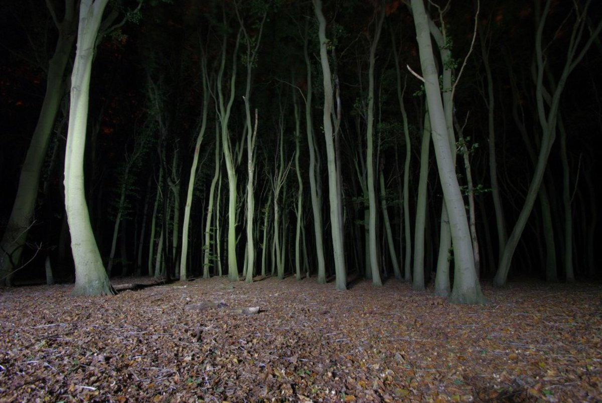 The 5 Most Haunted Wooded Locations on Earth
