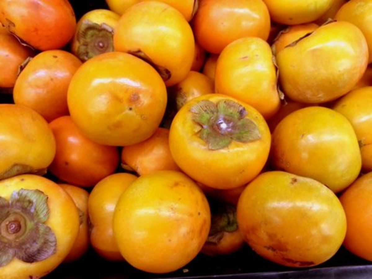 Persimmon can be eaten fresh, dried or fermented as persimmon vinegar