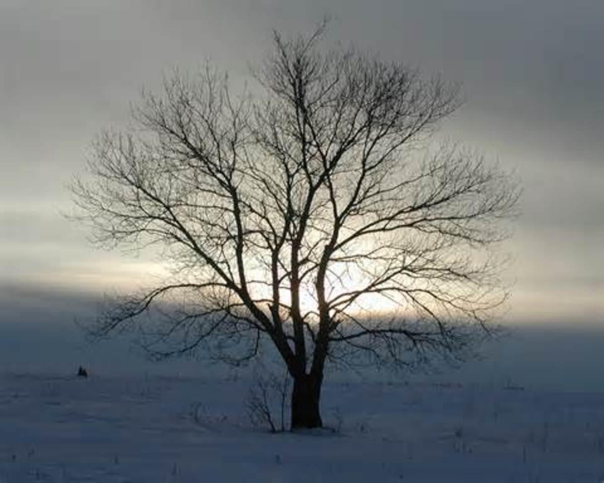 bare-trees