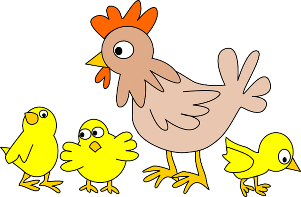 Make money from Chicken Farming-How to start a Chicken farm