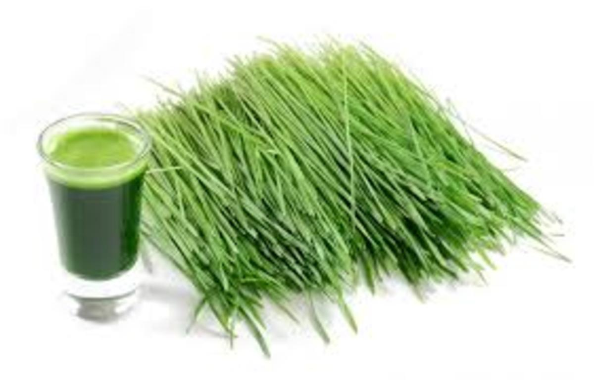 Wheatgrass is one of the worlds most powerful sources of life giving chlorophyll and oxygen.
