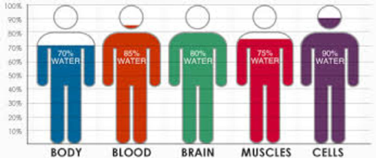 Water carries the oxygen into our bloodstream and is distributed throughout our bodies.