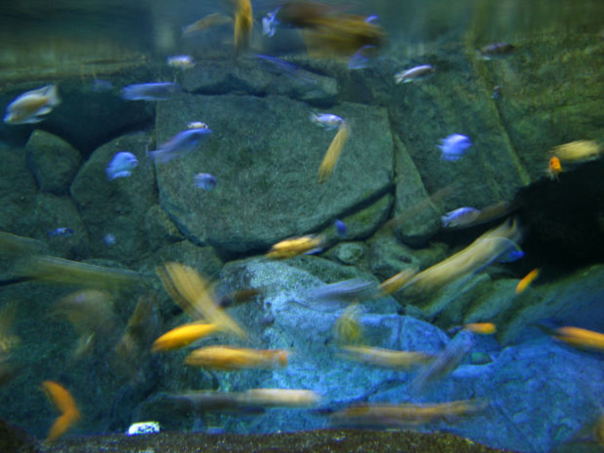 The blurred fish depict movement, which adds to the imagery.