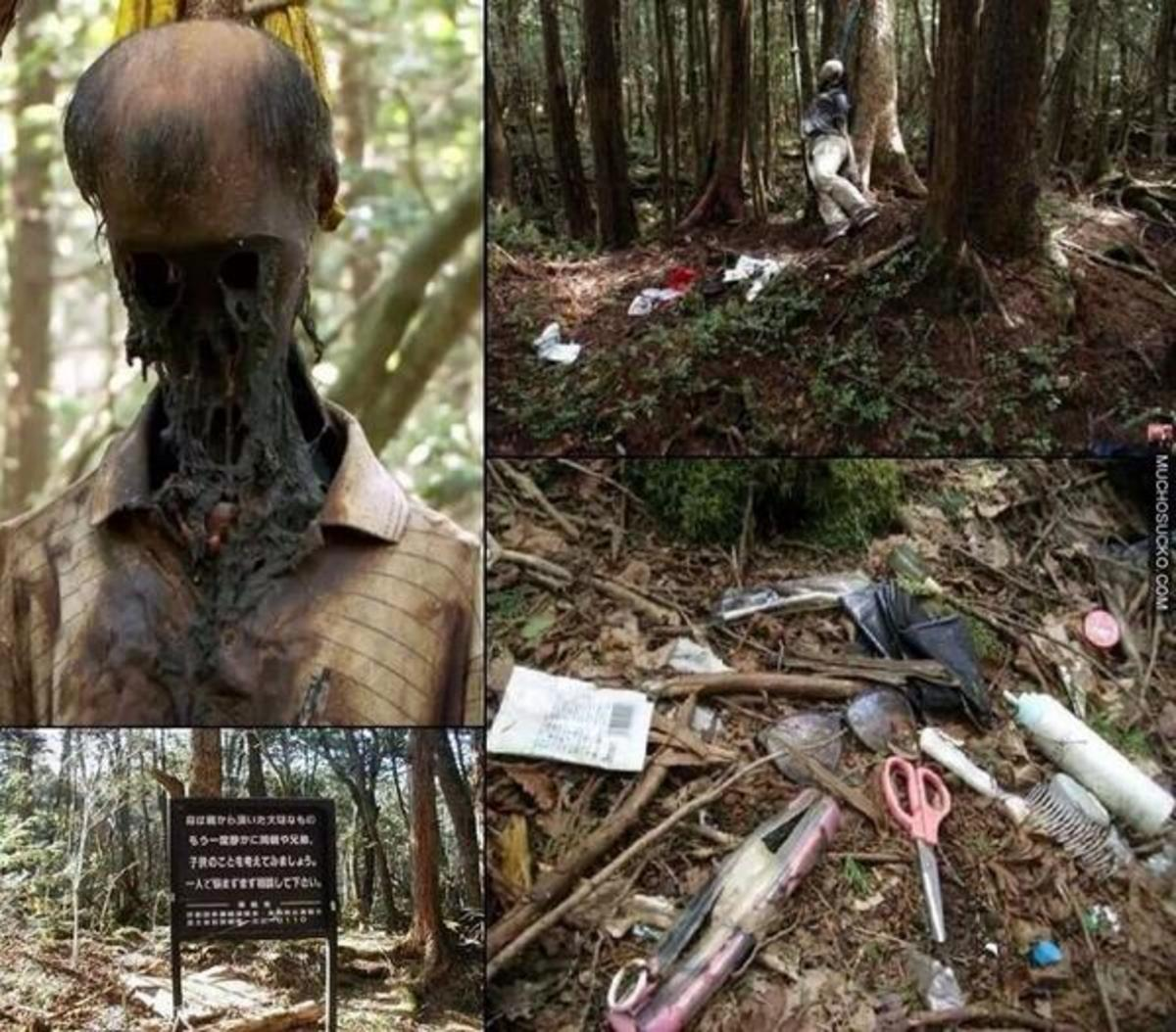 the-secrets-of-aokigahara