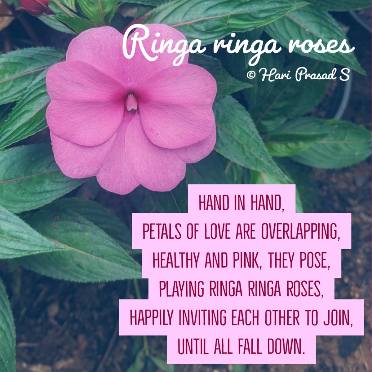 ringa-ringa-roses
