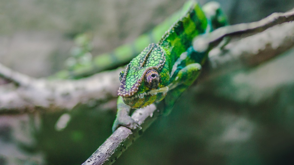 highly-sensitive-people-how-all-sensitive-people-are-natural-born-social-chameleons