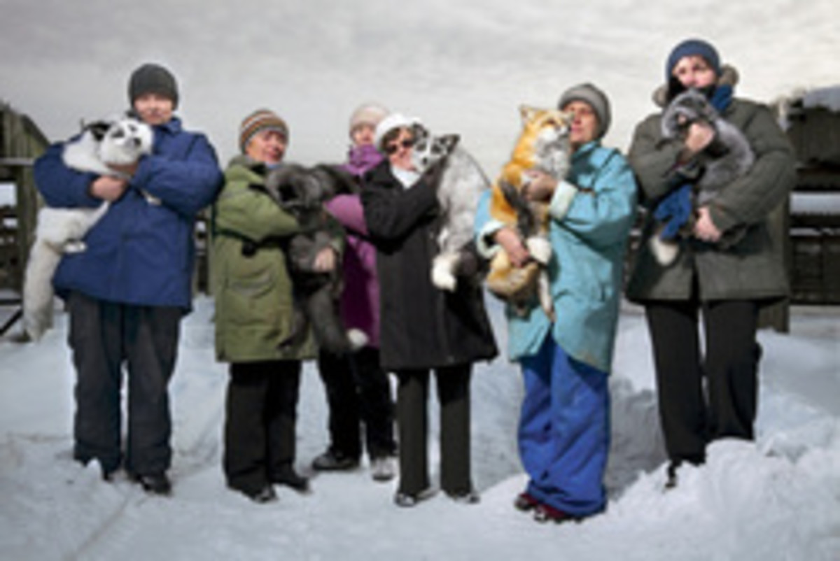 The Russian Tamed foxes