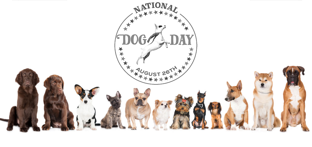 national-dog-day-august-26th