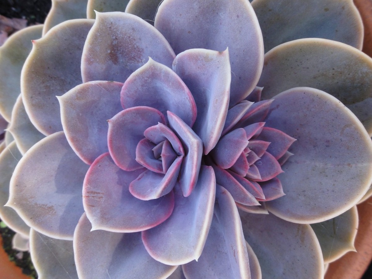 Succulent Fun Growing And Creating