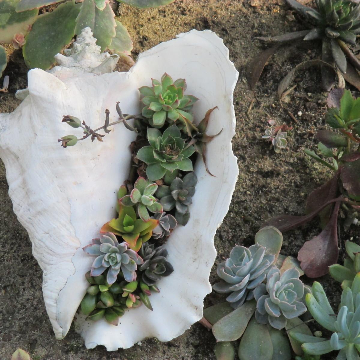 Sea Shell Planter