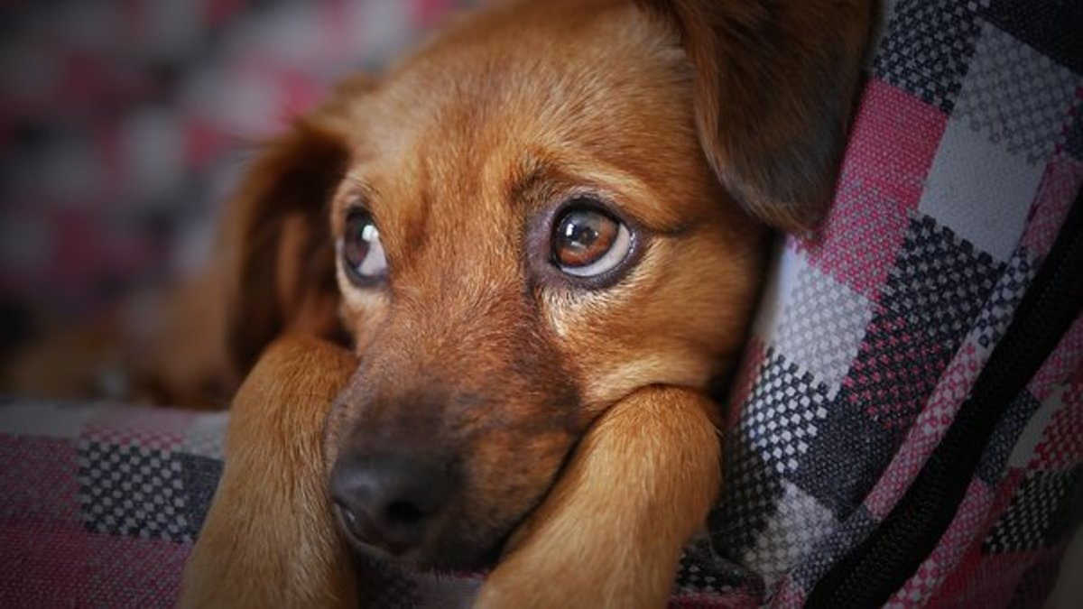 Just look into my eyes... My Cherokee dog name could be Tayanita.