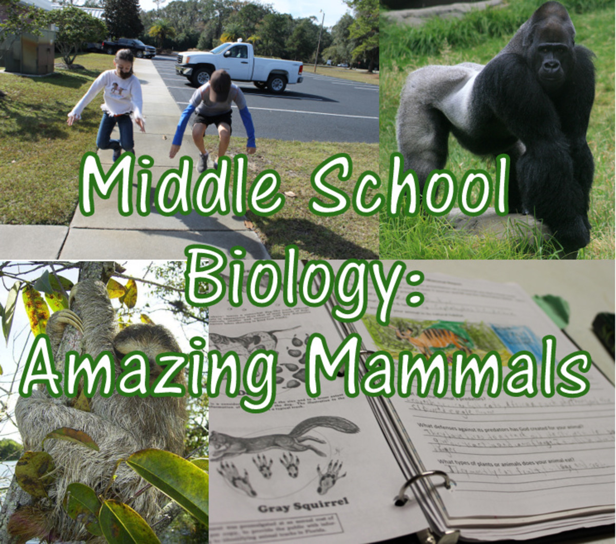 Christian Middle School Biology Lesson: Amazing Mammals