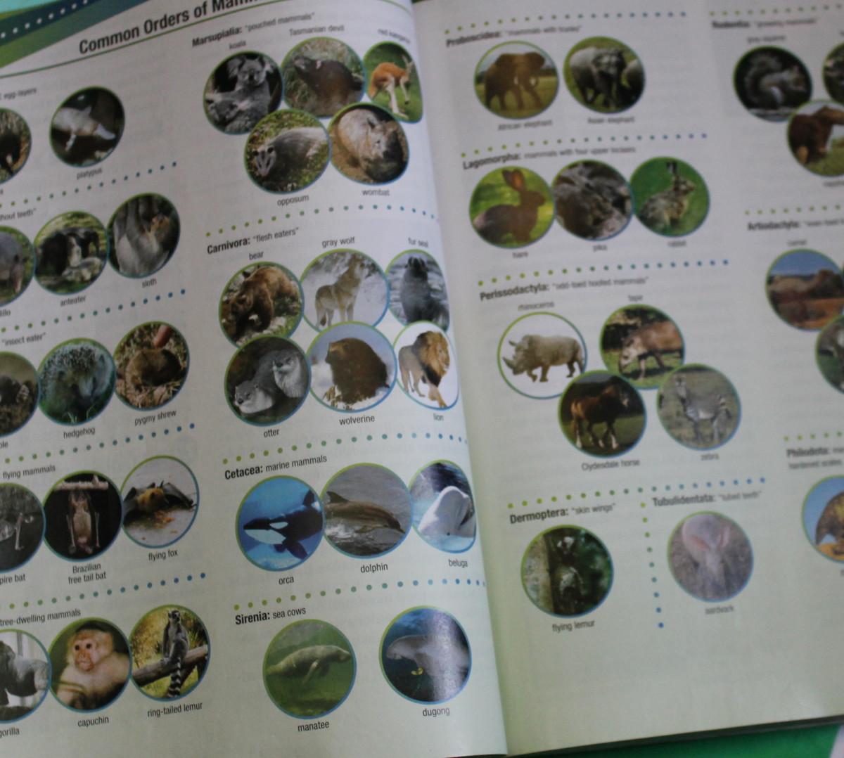 amazing-mammals