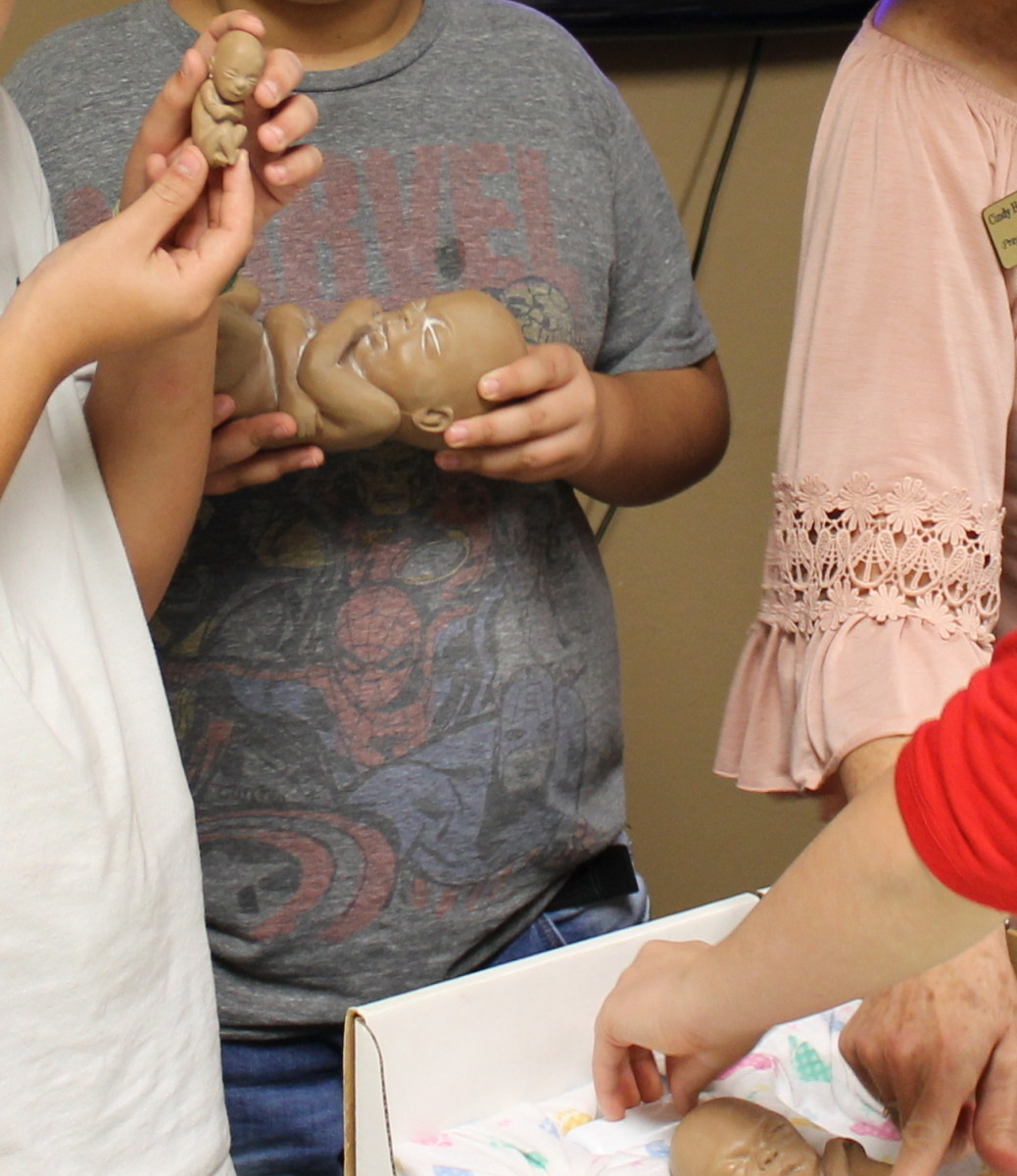 Comparing the size and development of model babies. The smallest one is modeled after a 12 week old baby.