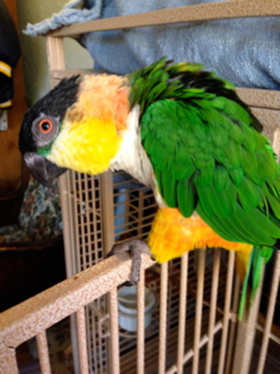 "Jack demonstrates his ""vulture"" pose."