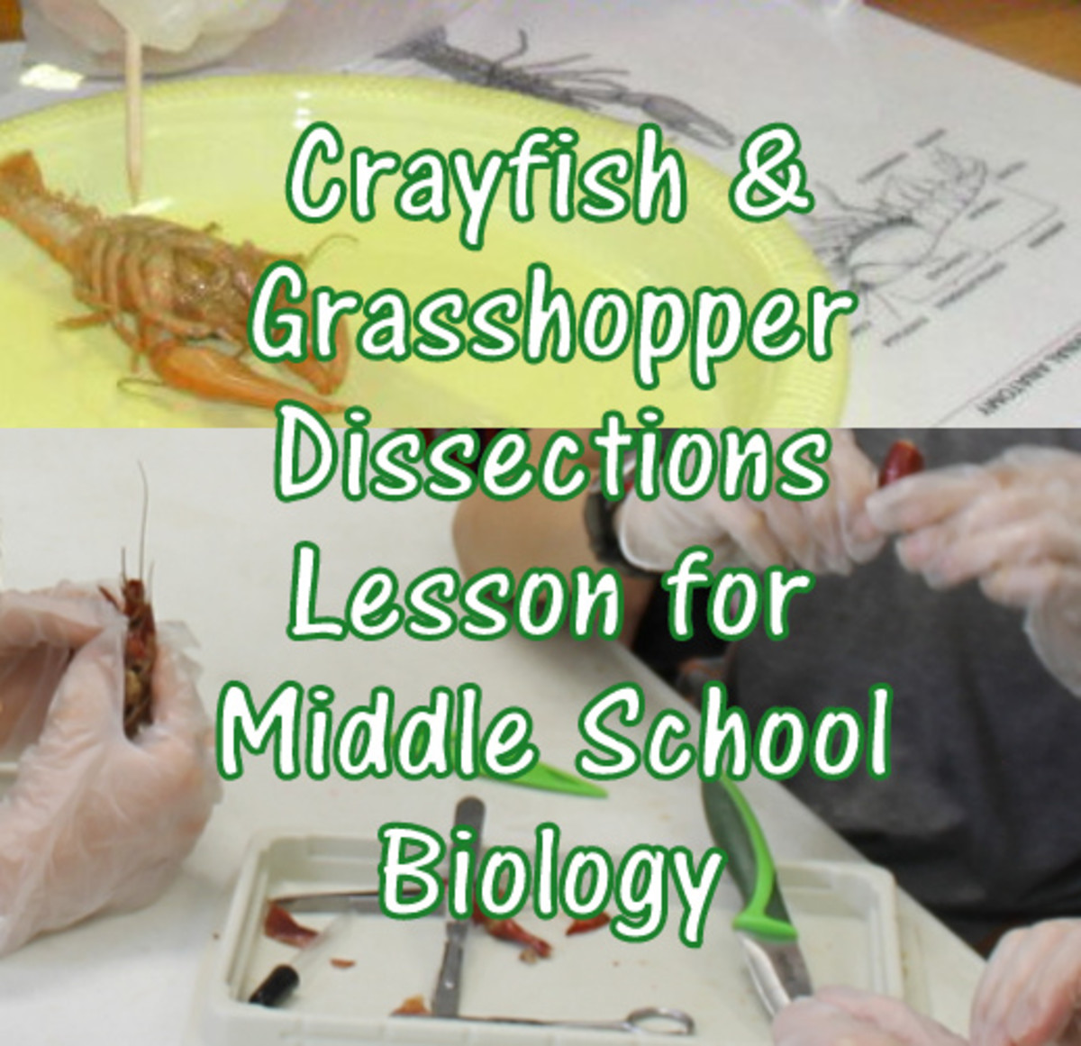 Arthropod Anatomy & Dissection Lesson for Middle School: Crayfish and Grasshoppers