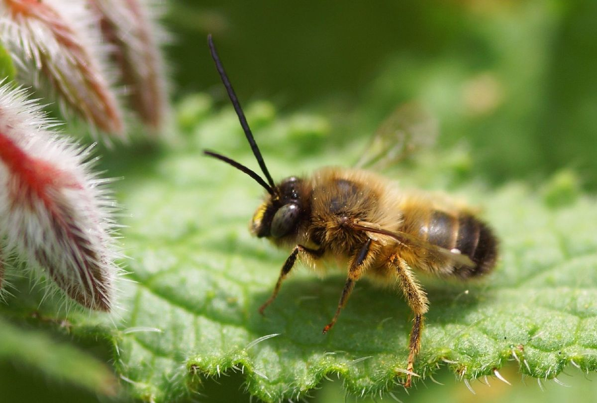 Home Remedies For Bee and Wasp Stings