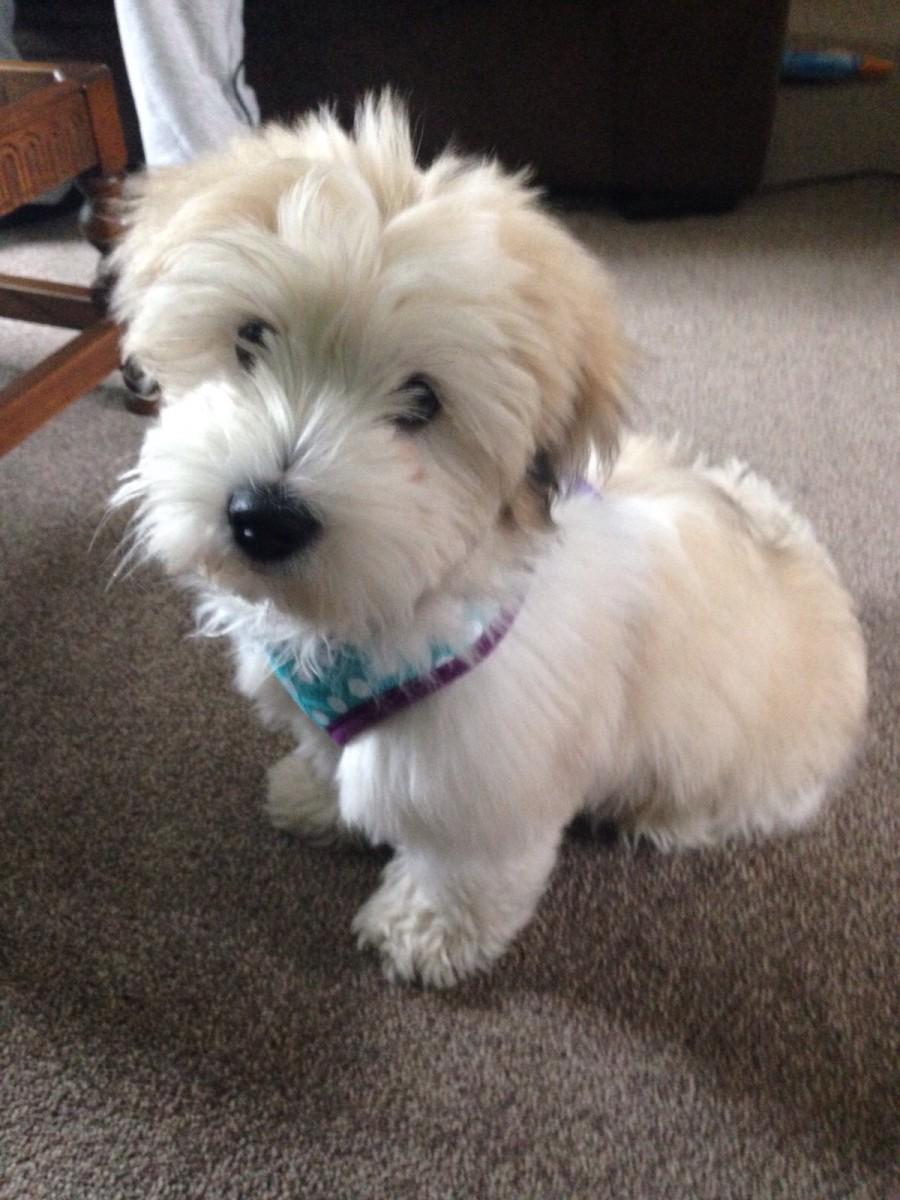 Meet Toby, this is him at around 14 weeks old